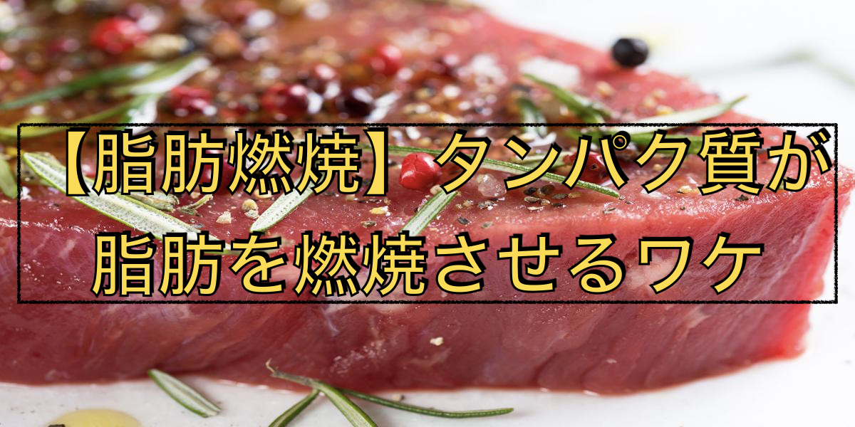 【脂肪燃焼】タンパク質が脂肪を燃焼させるワケ